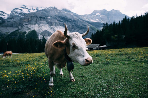 Funny facts about Switzerland