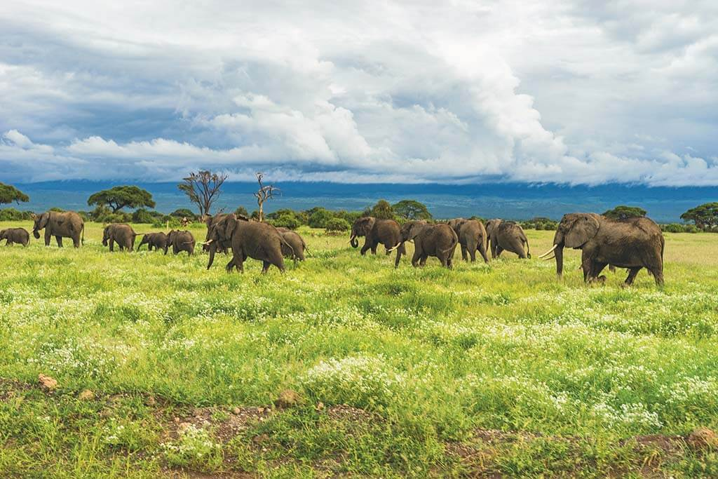 Amboseli, a perfect safari destination in Africa