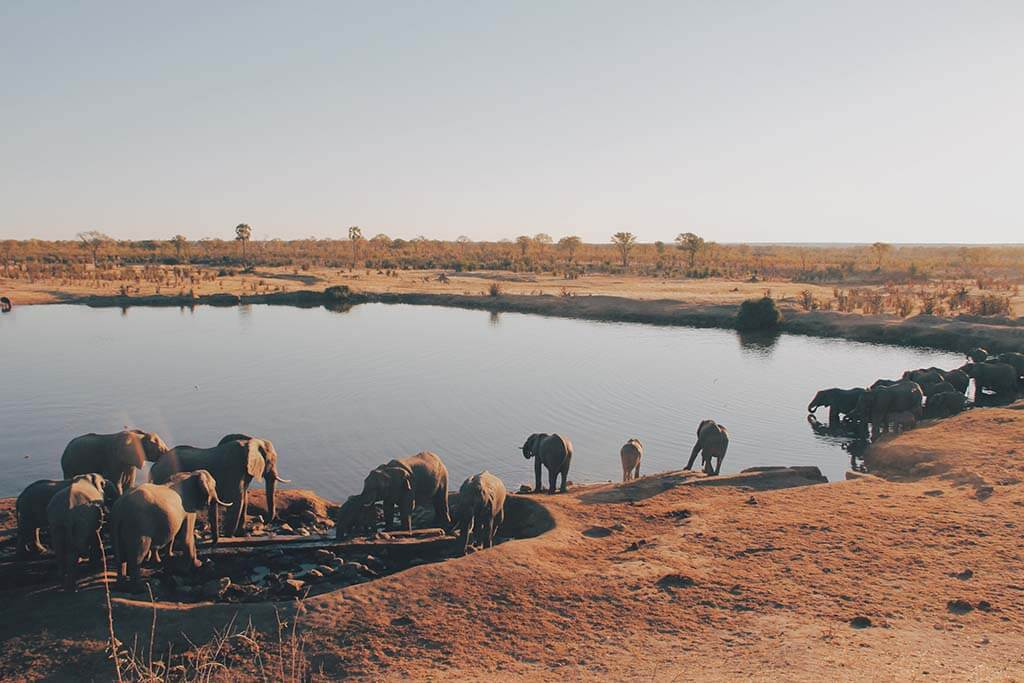 Safari in Zimbabwe: Hwange National Park
