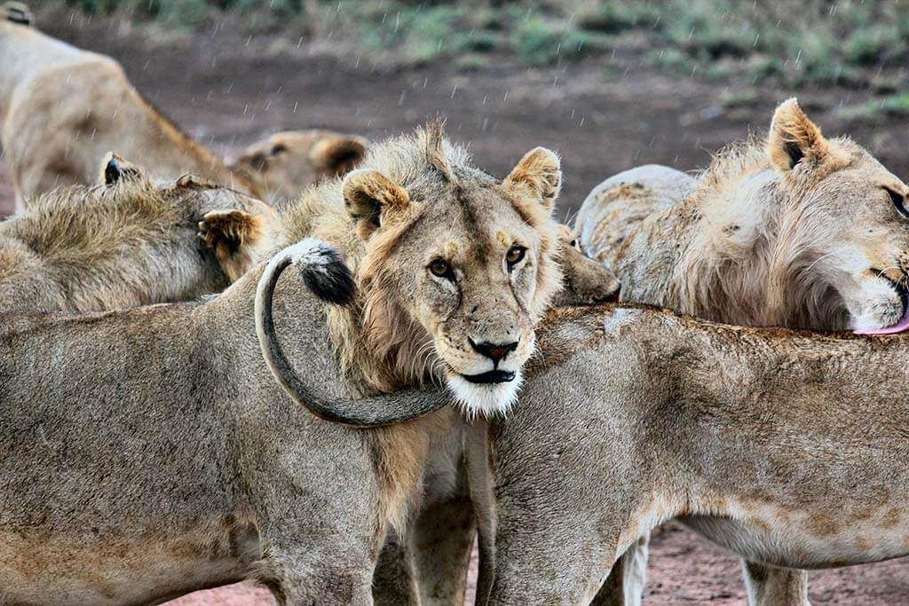 The best safari destinations in Africa: Serengeti