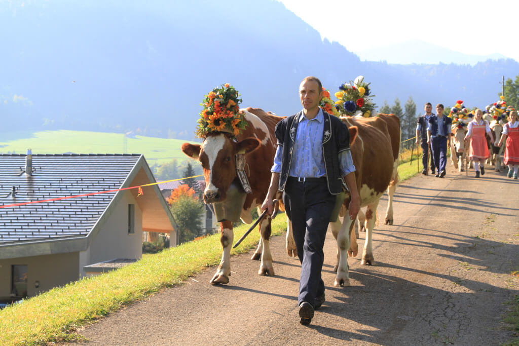 The cows are coming home in Appenzell