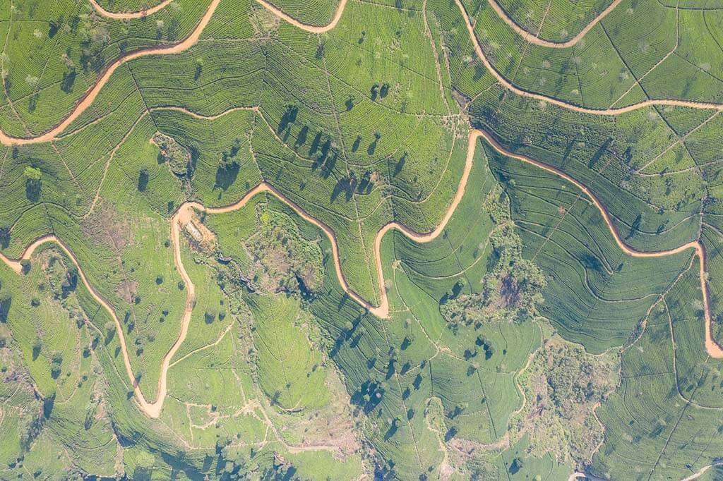 Tea plantations in Nuwara Eliya, Sri Lanka