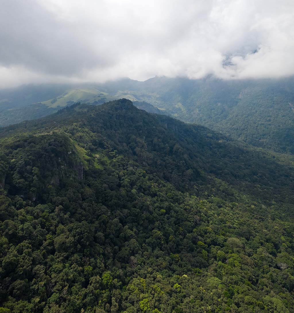 Cloud forests, Sri Lanka